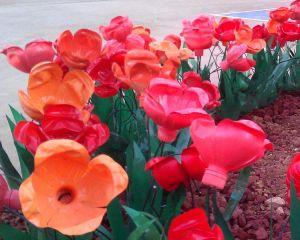 flowers_types_Image06