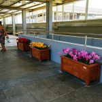israel-train-placemaking-600-003