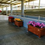 israel-train-placemaking-600-004